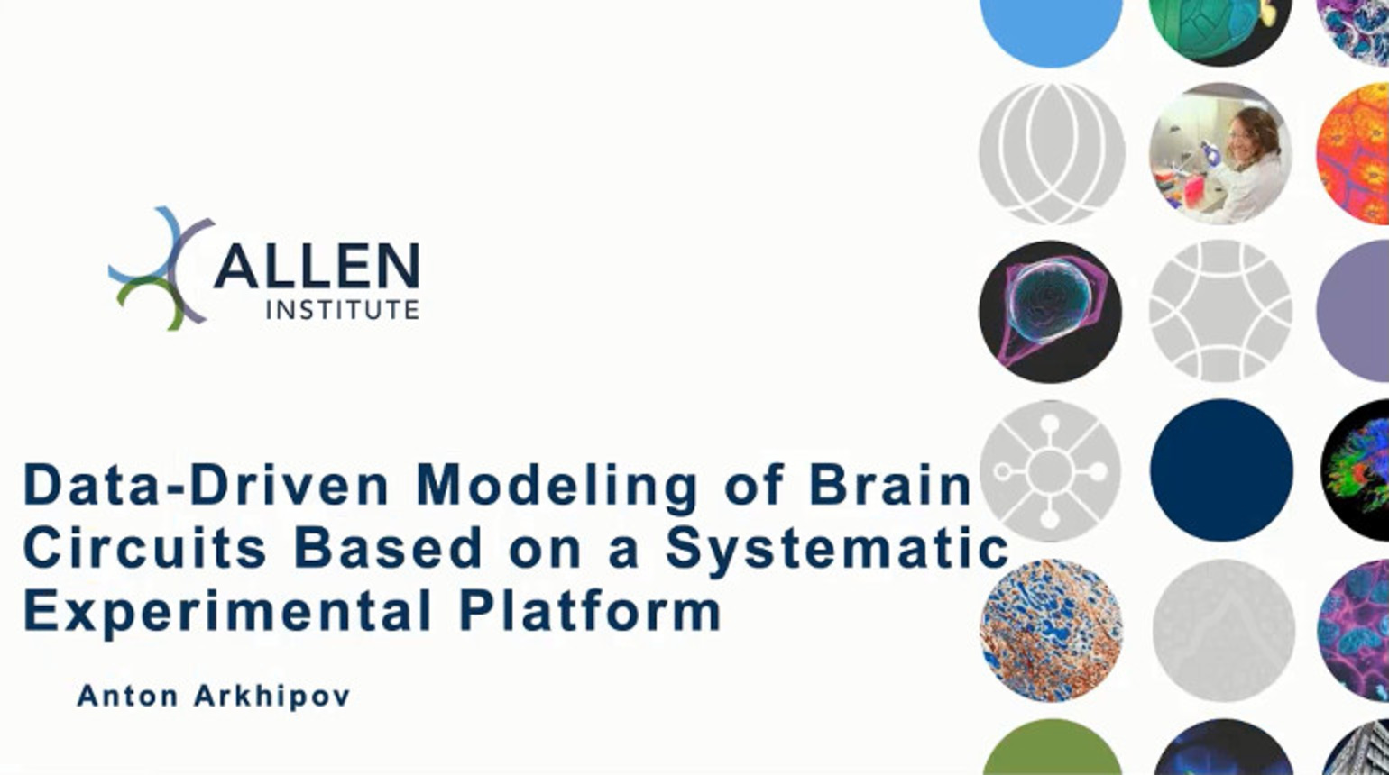IEEE Brain: Data-Driven Modeling of Brain Circuits Based on a Systematic Experimental Platform