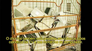Care Innovations: Toxics In Electronics (com legendas em portugues)